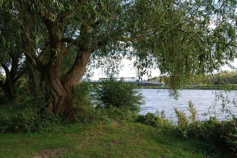 صور لـ #نهر #إسهال #شجرة #طبيعة #الأشجار
