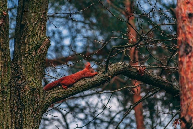 صور تحتوي #طبيعة #الحيوانات #السنجاب #غابة
