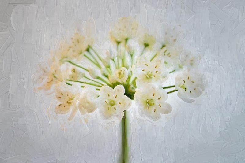 صور لـ #لوحة #أبيض #زهور #زهرة #الكراث_زهرة