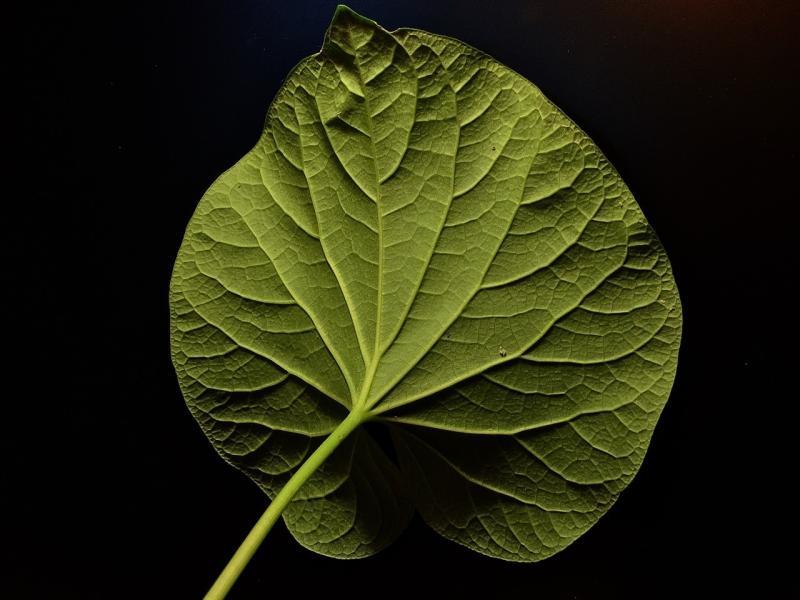 صور لـ #ورقة_الشجر #أخضر #طبيعة #ورقة_خضراء