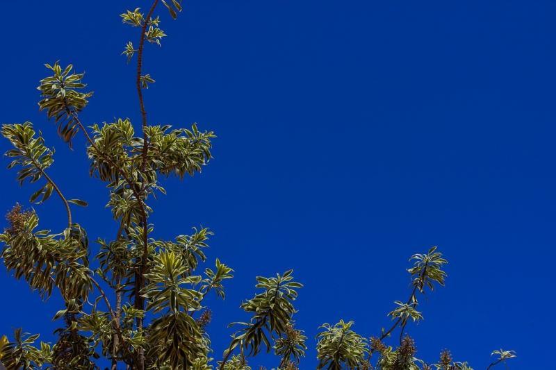 صور تحتوي #زهرة #سحاب #سيو #سماء #السماء_الزرقاء #أزرق #شمس #يوم