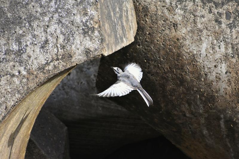 صور لـ #منع #حيوان #طيور_برية #شاطئ_بحر #طائر #بحر