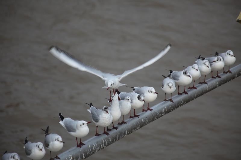 صور تحتوي #علم_القطب #النوارس #طيران #مقعد #خلاف #سلسلة