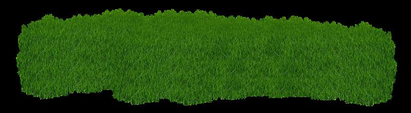 صور تحتوي #نجيل #طبيعة #عشب_اخضر #الصيف #أخضر #نبات