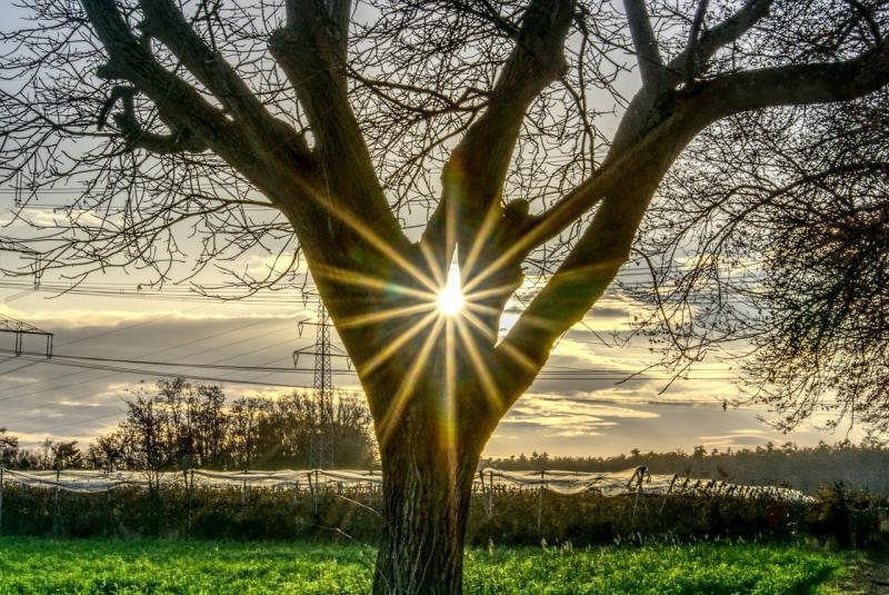 صور تحتوي #الخلفية #شمس #شجرة #سماء #نجمة_مبهرة #شعاع_الشمس