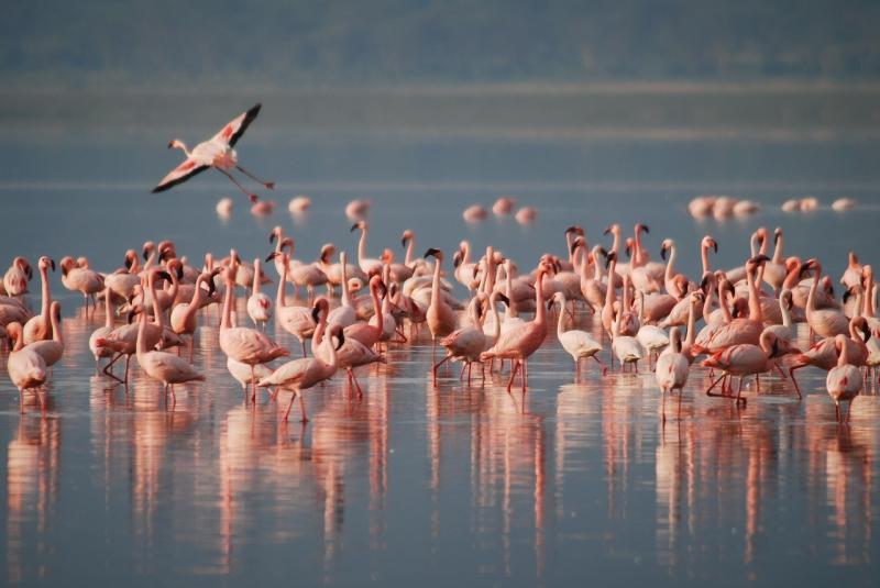 صور تحتوي #الحيوانات_البرية #حيوان #بري #طيور_النحام #طائر #أفريقيا #زهري