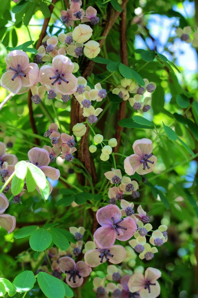 صور تحتوي #حديقة #الوردة #زاحف