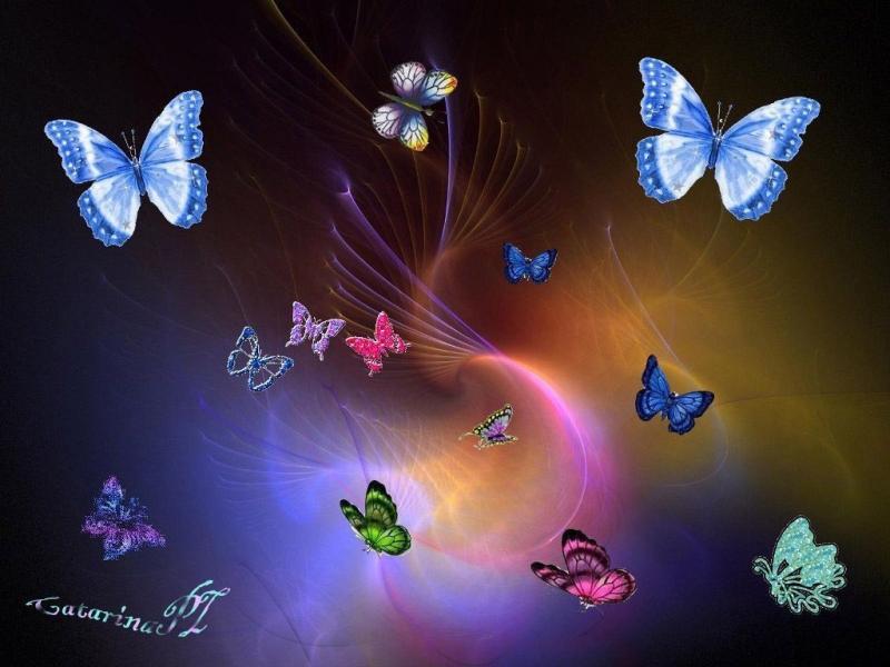 #خلفيات عالية الوضوح ل #فراشات #Butterflies #فراشة #حيوانات - 52