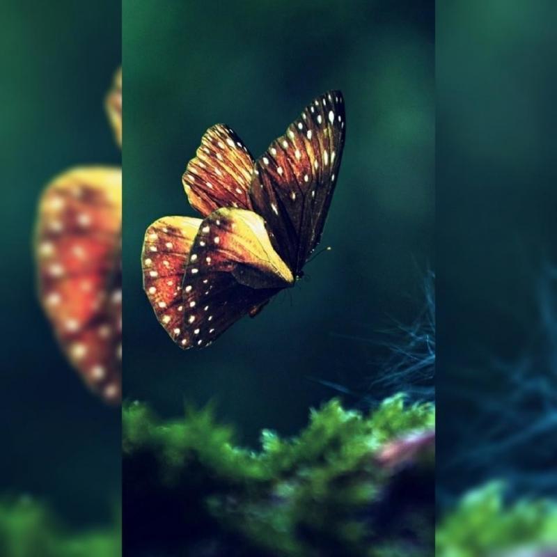 #خلفيات عالية الوضوح ل #فراشات #Butterflies #فراشة #حيوانات - 50