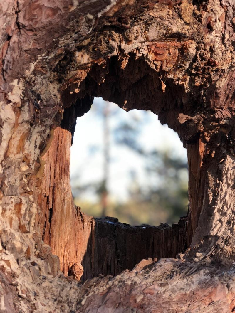 صور لـ #الجنة #طبيعة #سماء #ثقوب #شجرة #في_الخارج #المناظر_الطبيعية