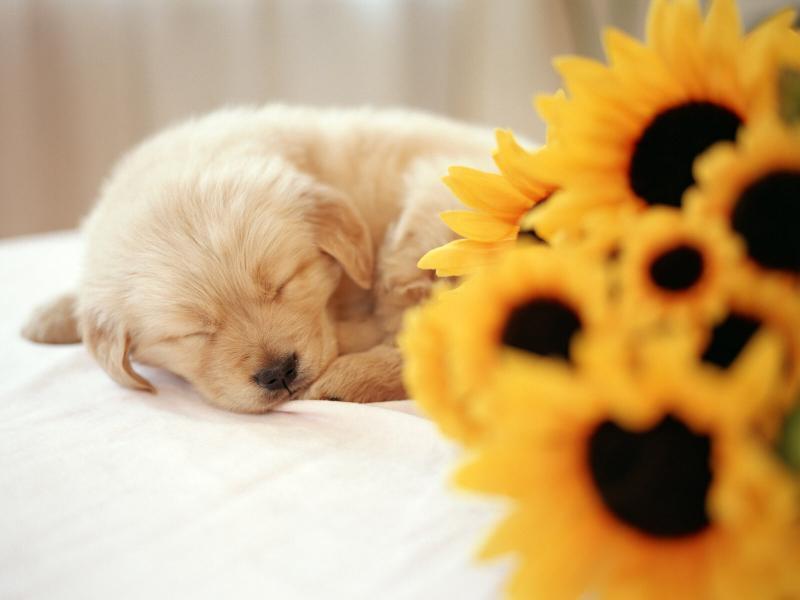 #خلفيات #كلاب #Dogs #حيوانات #Animals عالية الوضوح - 1