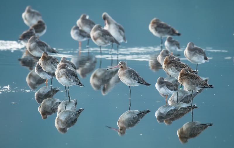 مجموعة صور #عصافير #عصفور #طيور #طير #Birds عالية الوضوح - 599
