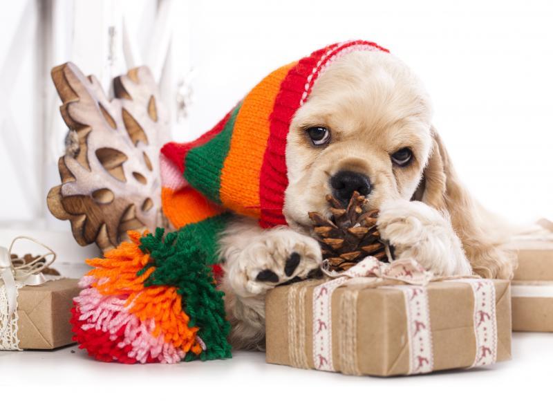 صور #هدايا #هدية #Gifts عالية الوضوح - 128