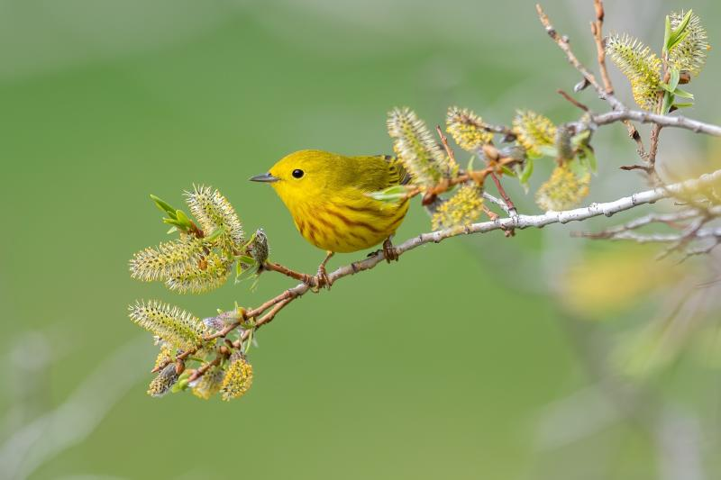مجموعة صور #عصافير #عصفور #طيور #طير #Birds عالية الوضوح - 600