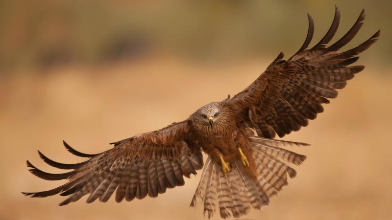 صور #نسور #نسر #Eagles #حيوانات #Animals #طيور #Birds عالية الوضوح - 116