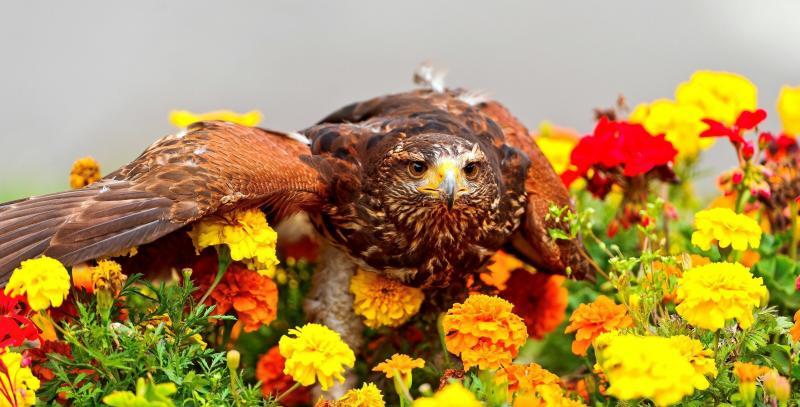صور #نسور #نسر #Eagles #حيوانات #Animals #طيور #Birds عالية الوضوح - 125