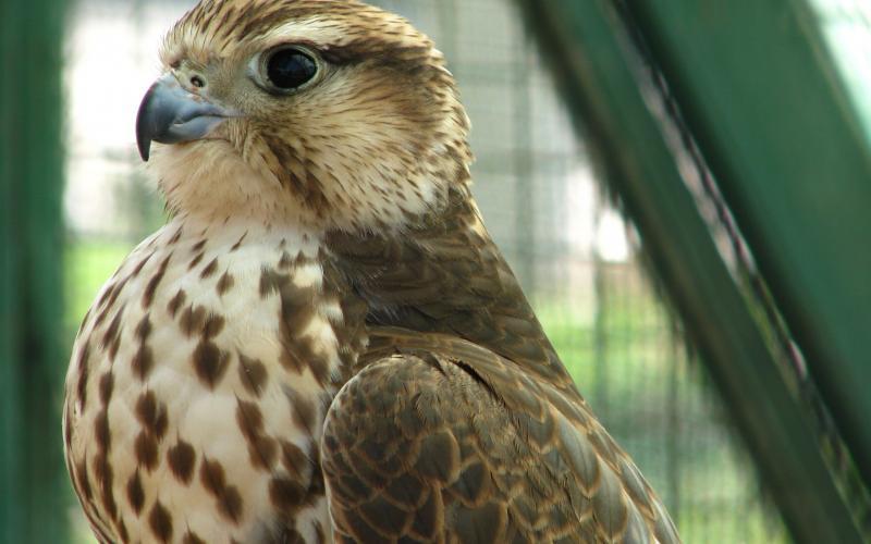 صور #نسور #نسر #Eagles #حيوانات #Animals #طيور #Birds عالية الوضوح - 264