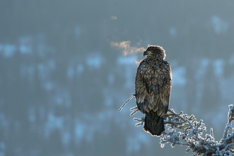 صور #نسور #نسر #Eagles #حيوانات #Animals #طيور #Birds عالية الوضوح - 123