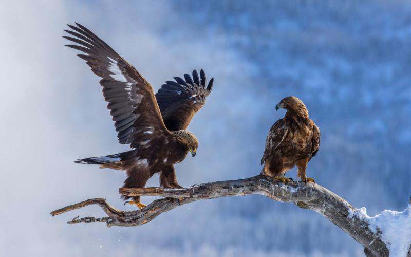 صور #نسور #نسر #Eagles #حيوانات #Animals #طيور #Birds عالية الوضوح - 122