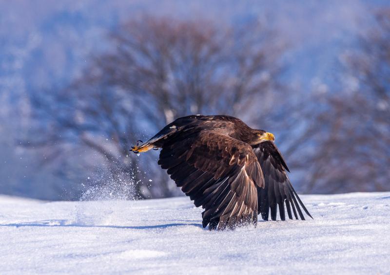 صور #نسور #نسر #Eagles #حيوانات #Animals #طيور #Birds عالية الوضوح - 126