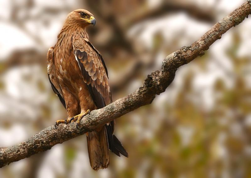 صور #نسور #نسر #Eagles #حيوانات #Animals #طيور #Birds عالية الوضوح - 263