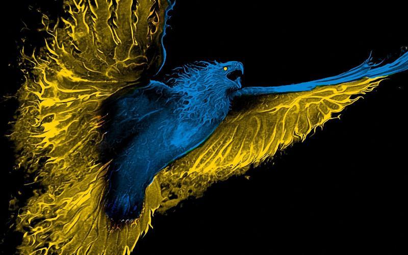 صور #نسور #نسر #Eagles #حيوانات #Animals #طيور #Birds عالية الوضوح - 251