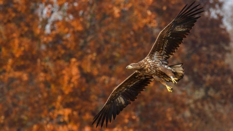 صور #نسور #نسر #Eagles #حيوانات #Animals #طيور #Birds عالية الوضوح - 124