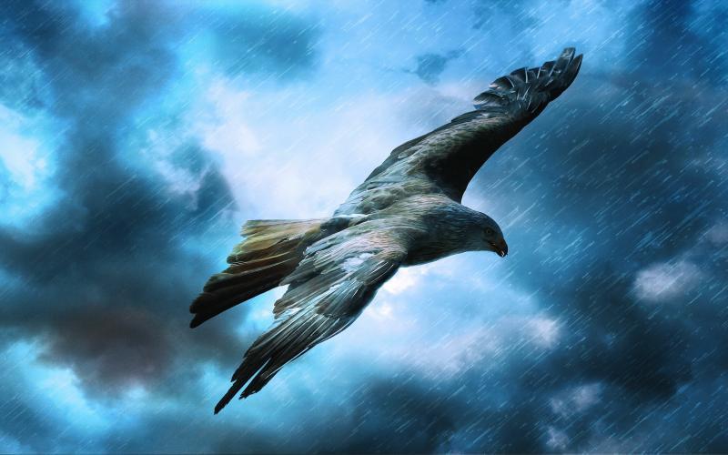 صور #نسور #نسر #Eagles #حيوانات #Animals #طيور #Birds عالية الوضوح - 121