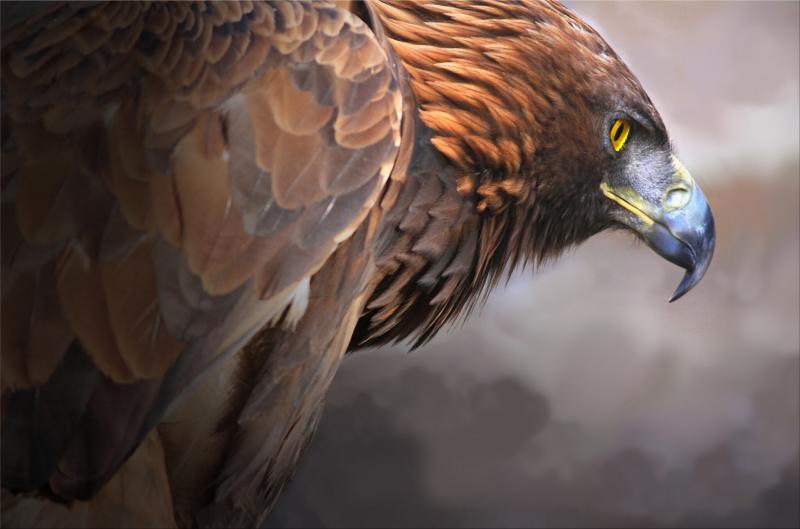 صور #نسور #نسر #Eagles #حيوانات #Animals #طيور #Birds عالية الوضوح - 250