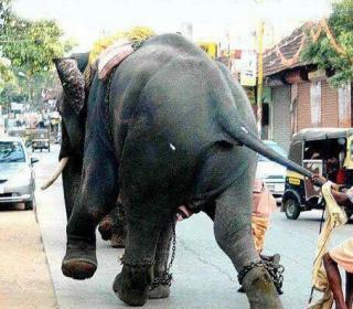 Fay3 صور مضحكة من الهند صورة 3